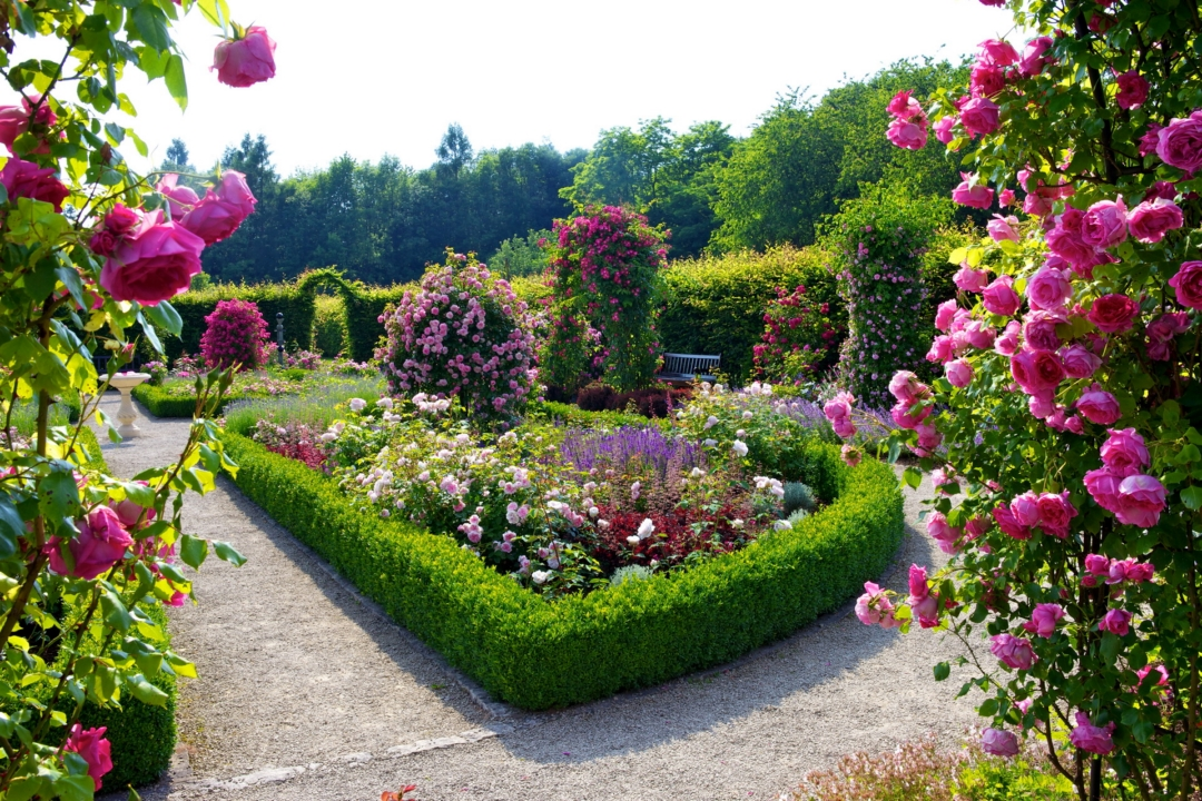 Beautiful flower garden and lawn ideas flowers wallpaper for Garden design with roses