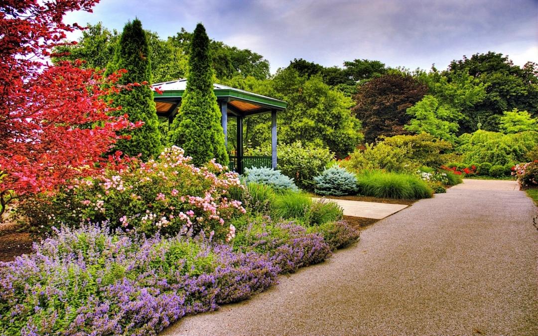 Wallpaper flowers, garden, park, forest, grass, flower (1)