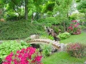 Wallpaper flowers, garden, park, forest, grass, flower (2)