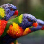 Birds Animals Mobile Wallpapers (2)