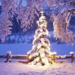Merry Christmas Wallpapers - No.1 HD Wallpapers