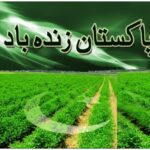 Full flag Independence Day Pakistan 14 August 2015