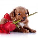 Puppy Love Cute flower Wallpaper