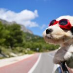 Lovely travle Dog Wallpaper
