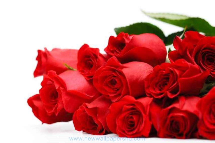 New valentine's red roses flowers pics free download