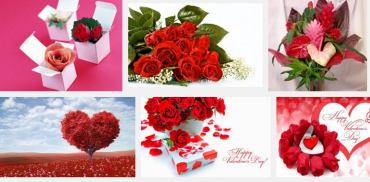 Valentine day flowers HD Images