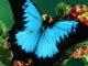 Butterfly Cover Photos Faceboko