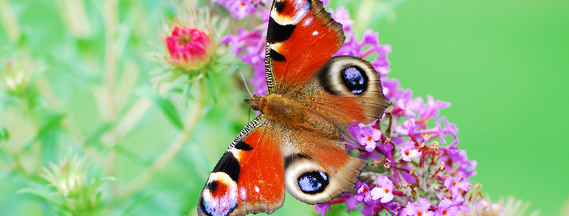 New Colourful Butterfly Stock Photos