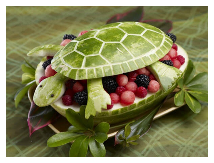 Tortoise Fruit reptile Ideas pictures images download
