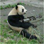 Funny Photos of panda Bear with Metal Gun